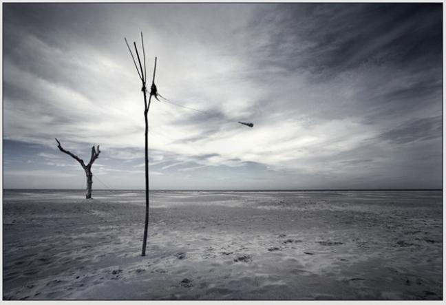 lonesome trees