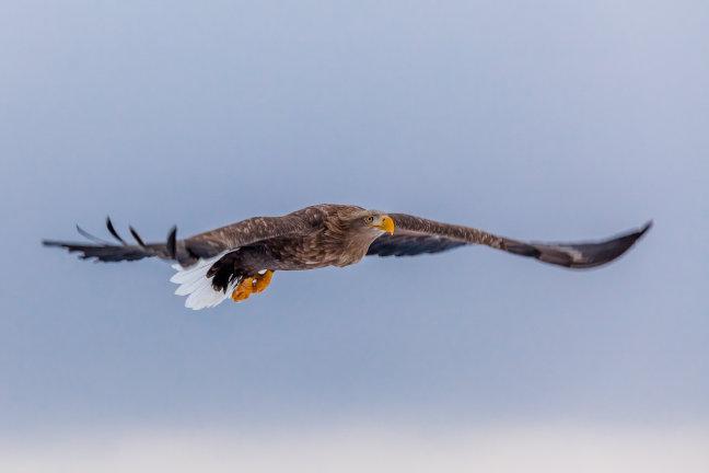 'Fly Like an Eagle'