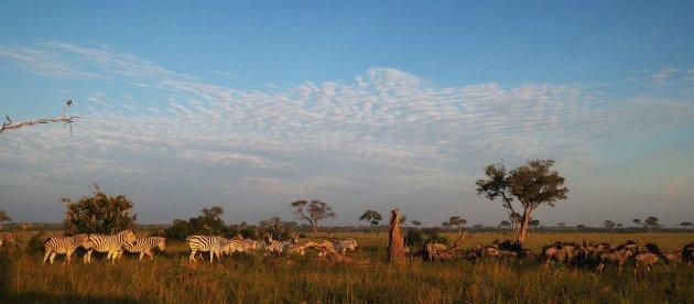 Breedbeeld safari