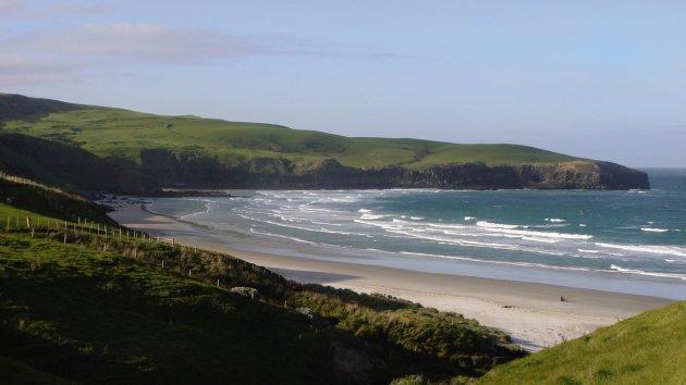 Wildlife kijken op Otago Peninsula
