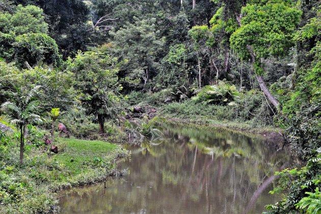 Sambar-herten in Khao Yai