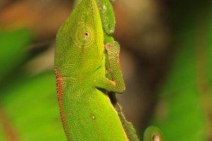 Op zoek naar Kameleon's