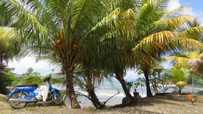 Just a random day in Marigot Dominica