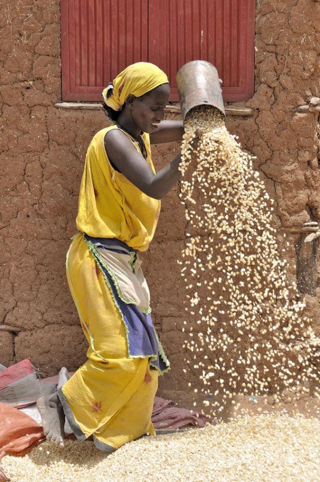Het kaf van het koren scheiden op de markt van Turmi