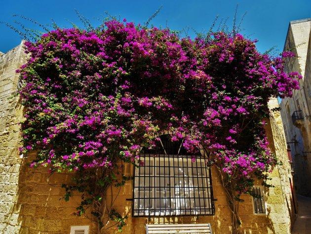Fleurig plekje in Mdina