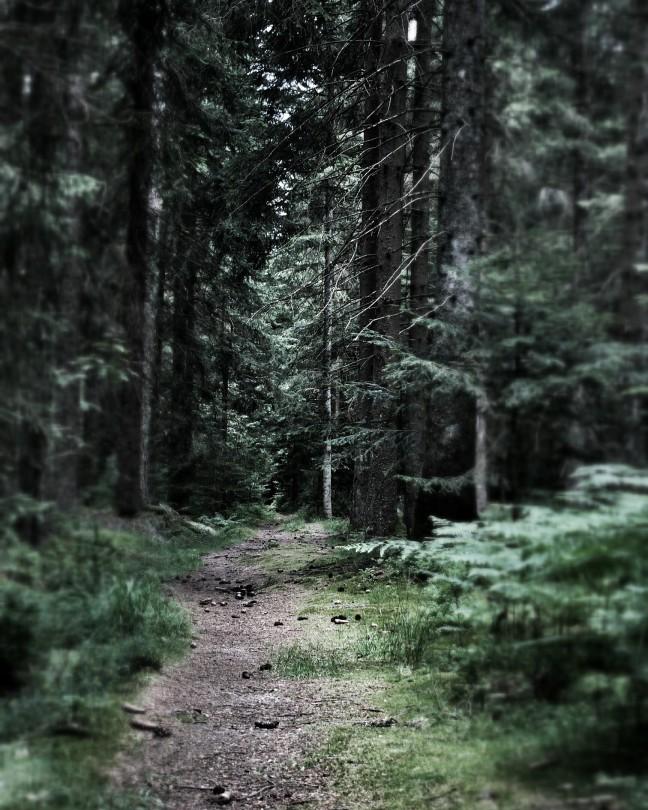 bospad in het Zwarte Woud