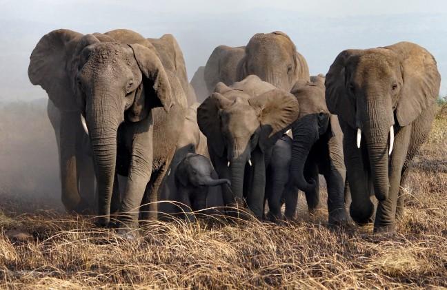 Een olifantenpad In Queen Elisabeth NP