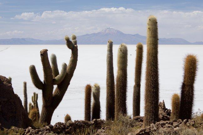 reuse cactussen