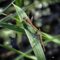 '537363' door Dragonfly
