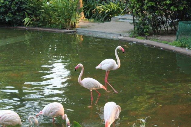 Flamingo's in Hongkong?!
