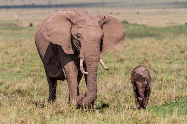 met ma op de savanne