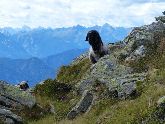 'Wildlife' in de Oostenrijkse bergen