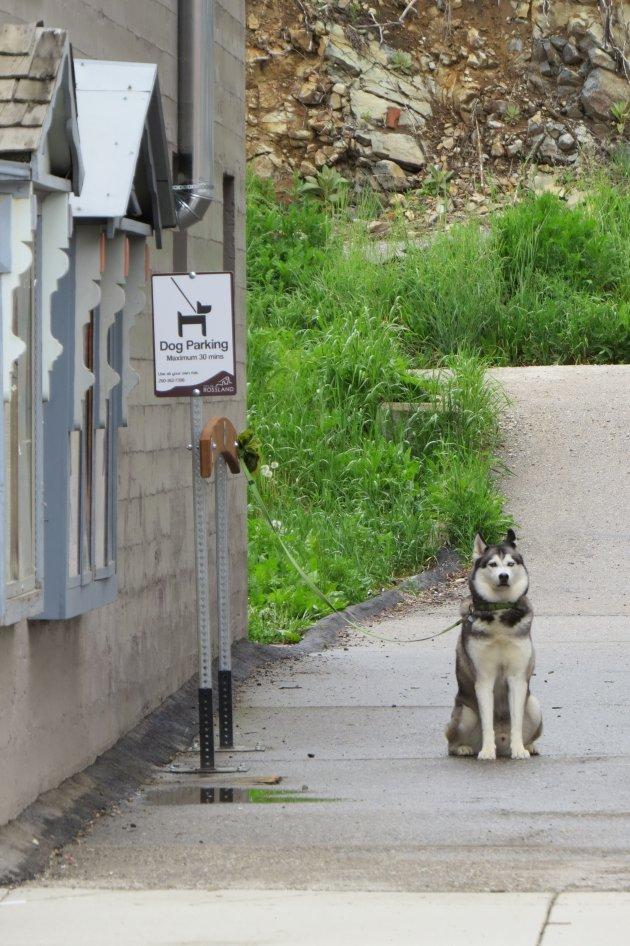 In British Columbia parkeer je de husky en niet je auto