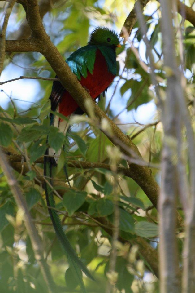 Quetzal spotten in Costa Rica