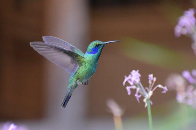 Vliegmonstertjes in the sky, Kolibries in Costa Rica