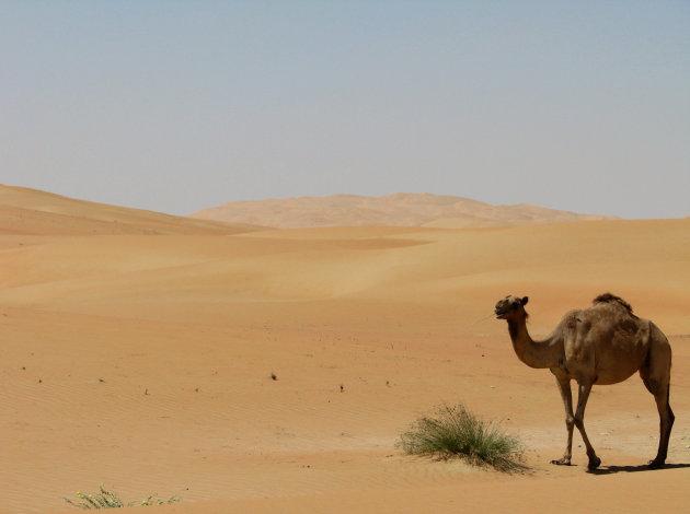 Het schip van de woestijn