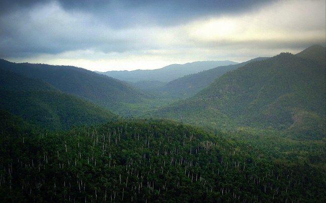 Cubaans woud