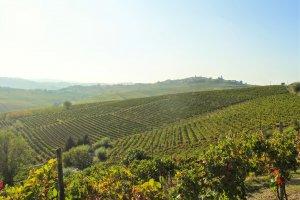 Een zee van wijngaarden