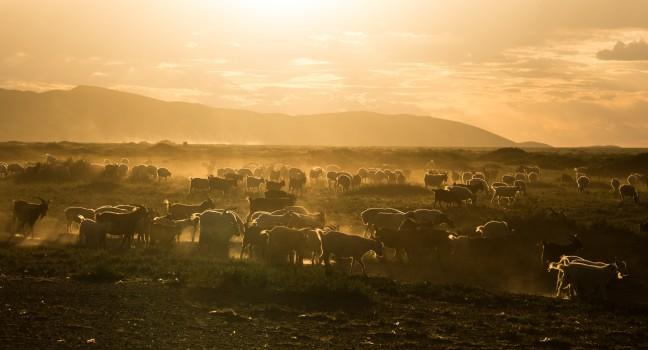 Gouden uurtje in Gobi