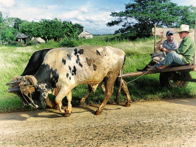 Slechte wegen & plattelandsfoto's
