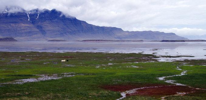 Fjordenlandschap in de Oostfjorden