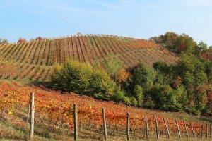 Golvende wijngaarden in Piemonte