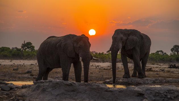 Elephants Sunset