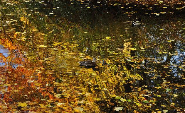 Spiegel van de herfst