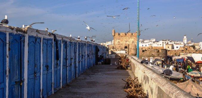 Meeuwen in overvloed, Essaouira