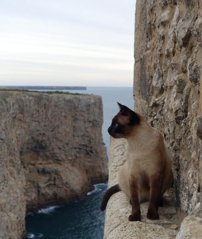 Adventure-cat