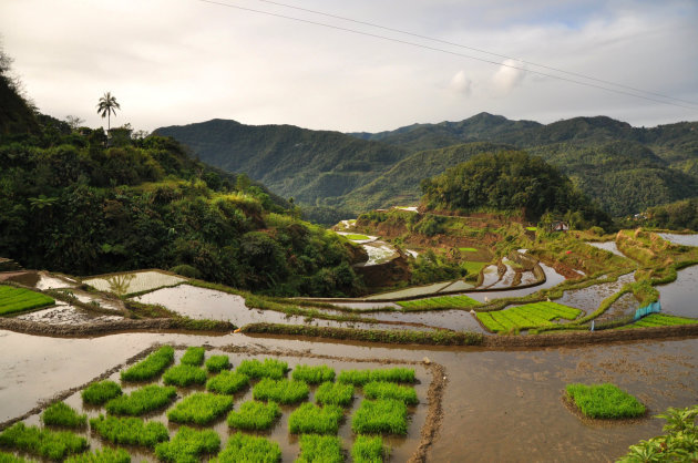 Mooiste rijstterrassen bij Banaue
