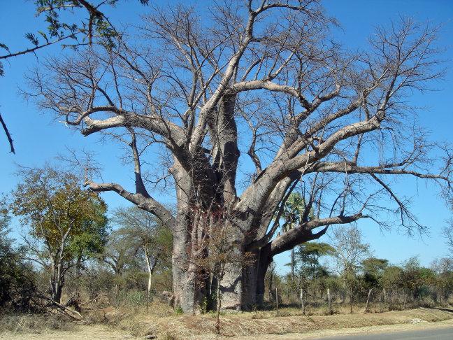Een boom om trots op te zijn.