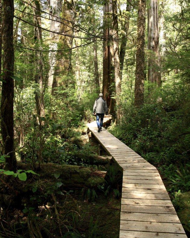 Wandel door een oeroud regenwoud
