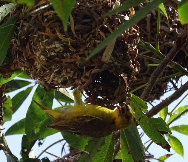 Nest ingang