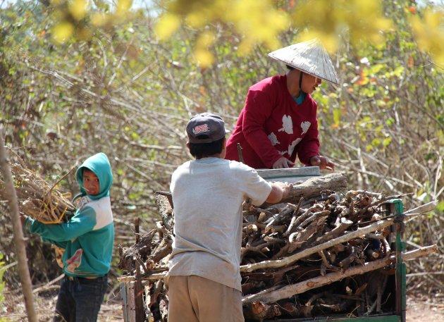 Brandhout verzamelen