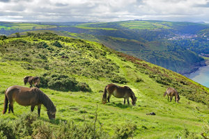 De vrijheid in Exmoor