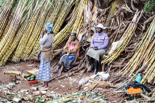 De dames van de suikerriet