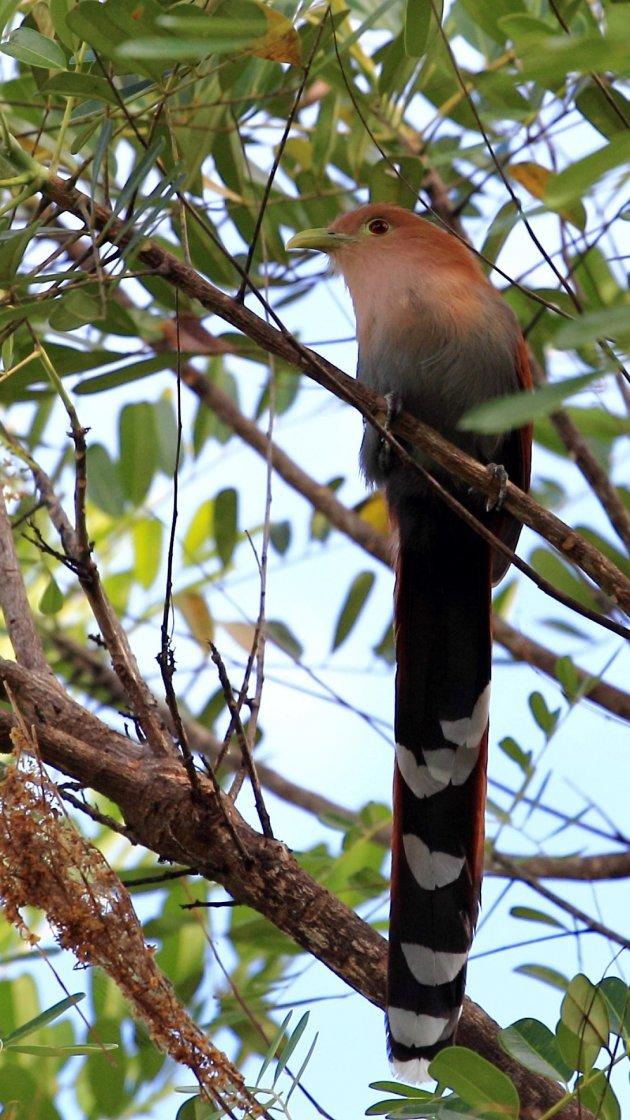 Het vogelrijk Costa Rica 5
