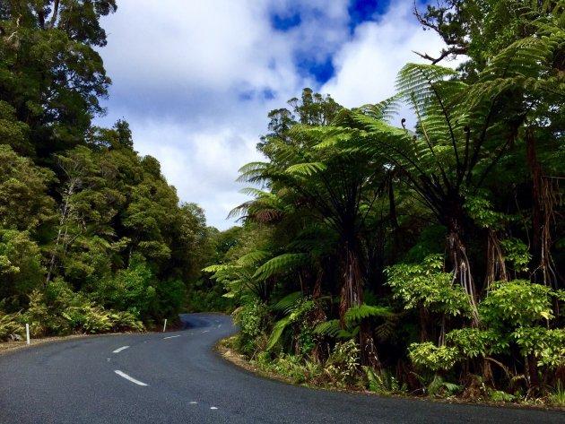 Kauri wouden op het Noordereiland van Nieuw Zeeland