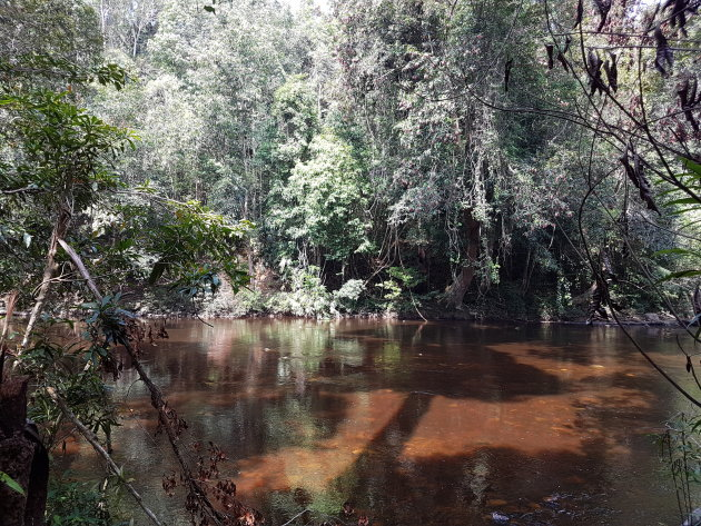 Tropisch regenwoud Taman Negara