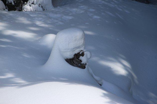 Tulband in de sneeuw