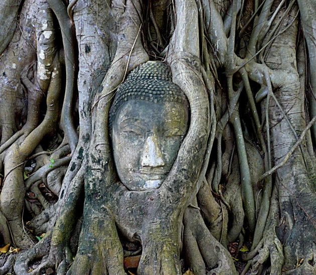 Verstrengelde boeddha