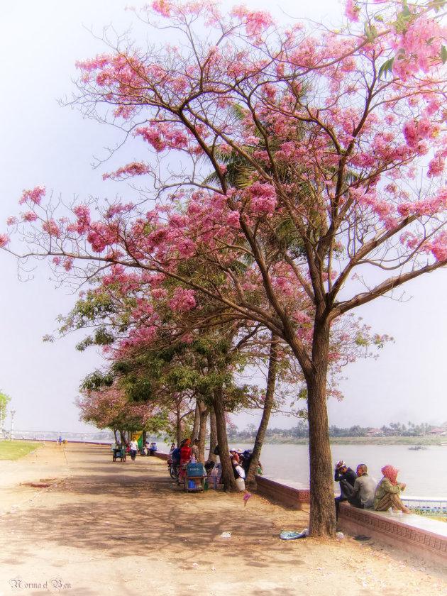 Aan de oever van de Mekong