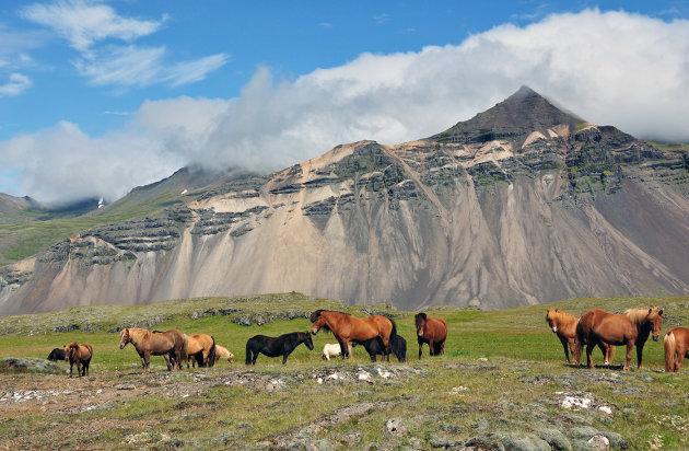 IJslanders in Oostland
