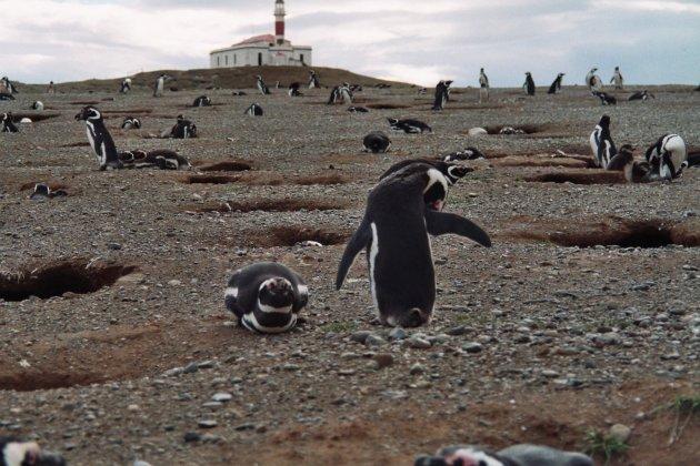 Pinguïneiland