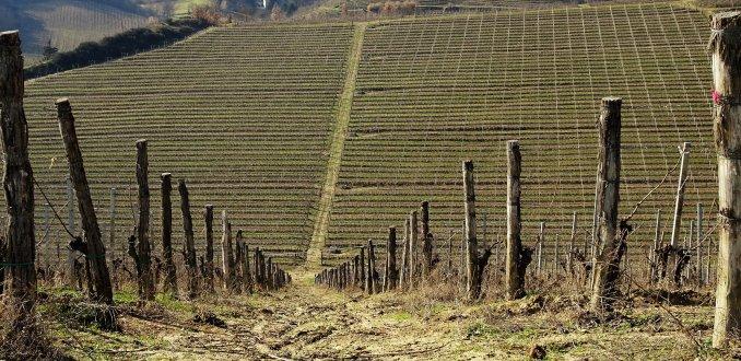 Winterwijngaarden in Piemonte