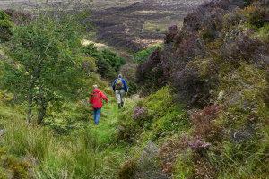 Dartmoor en zijn pixies