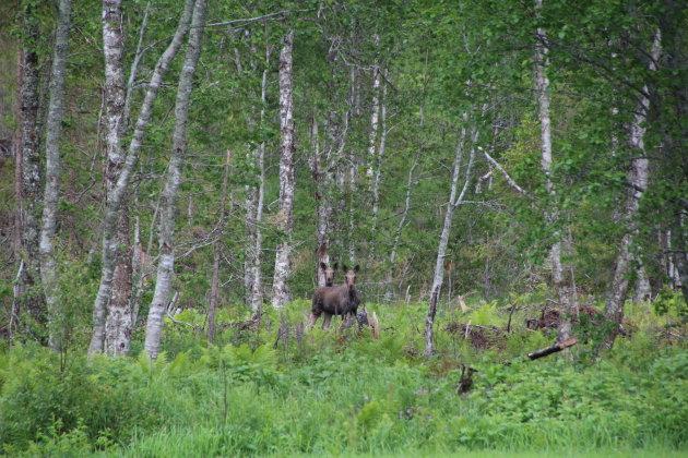 2 paar oortjes in het bos