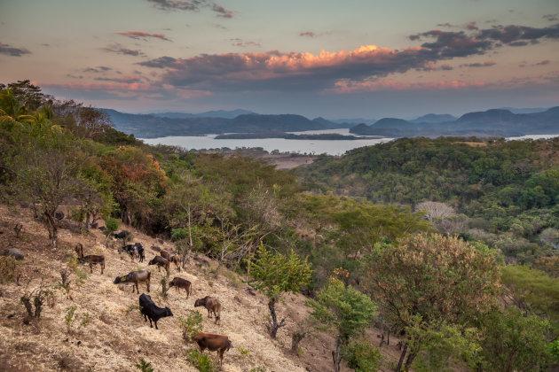 Pastoraal landschap