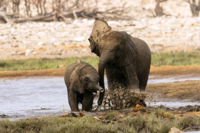 Spelende olifantjes